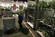 Il Mercato dei fiori di Sanremo *** Local Caption ***<br /> The flower market of Sanremo