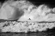 November 2nd 2010: (Image has been transfered to Black & White) Free surfing at Makaha Oahu-Hawaii. Photo by Matt Roberts/mattrIMAGES.com.au
