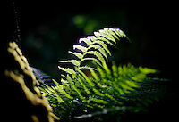 River bank fern Pic:Marc O'Sullivan