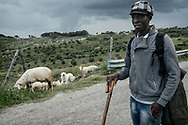 A Gambian migrant works as a shepherd in the Riace area while waiting for his papers. (RIACE Apr 2017)