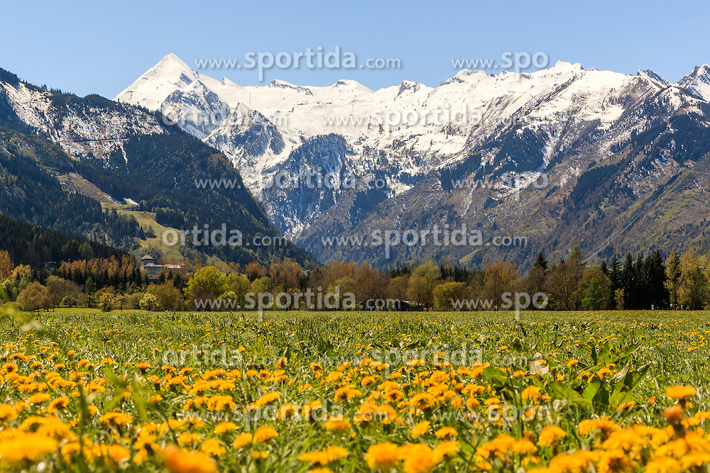 THEMENBILD - Blick auf den Kitzsteinhorn Gletscher, im Vordergrund eine Wiese mit Löwenzahn Blumen, aufgenommen am 30. April 2016 in Zell am See, Oesterreich // View of the Kitzsteinhorn Glacier, in the foreground a meadow with dandelion flowers, on 2016/04/30 in Zell am See, Austria. EXPA Pictures © 2016, PhotoCredit: EXPA/ JFK