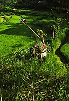 An idyllic Bali rural scene showing paddy fields, irrigation channels and surrounding bush land.