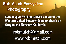 Rob Mutch Contact Info