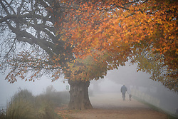 © Licensed to London News Pictures. 08/11/2019. London, UK. A man walks his dog through autumnal colours in a fog covered landscape at Richmond Park in west London on cold morning. Parts of the north of England have experienced severe flooding following torrential rainfall. Photo credit: Ben Cawthra/LNP