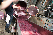 BROOKLYN, NY - October 31, 2014: At Brooklyn Winery in Williamsburg, workers pull grapes out of the fermentation chamber to be pressed. <br /> <br /> CREDIT: Clay Williams for Edible Brooklyn.<br /> <br /> © Clay Williams / claywilliamsphoto.com