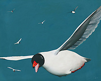 There is something instantly inviting about this fine art piece that shows a Black Headed Gull in spectacular fashion. This bird of the sea has the ability to make you feel as though you have taken a vacation to the ocean. This scene of the sea can make for a lovely addition to any room in your home, or even your place of business. -<br /> <br /> BUY THIS PRINT AT<br /> <br /> FINE ART AMERICA<br /> ENGLISH<br /> https://janke.pixels.com/featured/a-moment-in-a-faraway-destination-jan-keteleer.html<br /> <br /> WADM / OH MY PRINTS<br /> DUTCH / FRENCH / GERMAN<br /> https://www.werkaandemuur.nl/nl/shopwerk/Een-moment-in-een-verre-bestemming-/517249/132