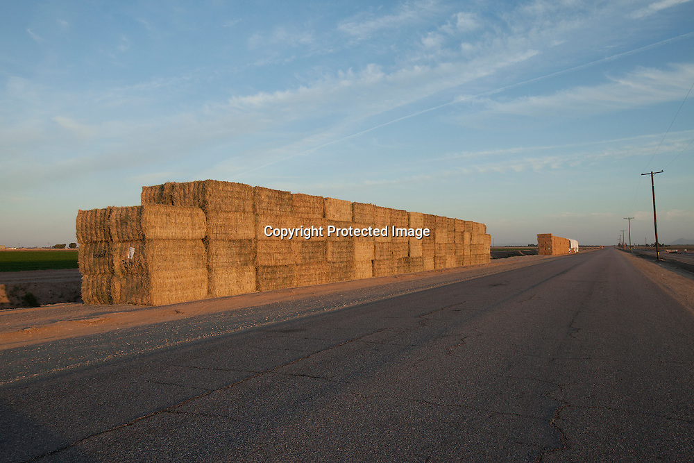 Alfafa packed in tight bales ready to be trucked to warehouse
