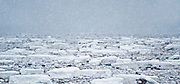 Panorama of snowing on the frozen tundra<br /> Churchill<br /> Manitoba<br /> Canada