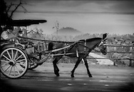 A pony cart plies the highway between Yogyakarta and Magalang, coated by volcanic ash accumulated from Mt. Merapi's worst eruption in over a century.  Java, Indonesia.