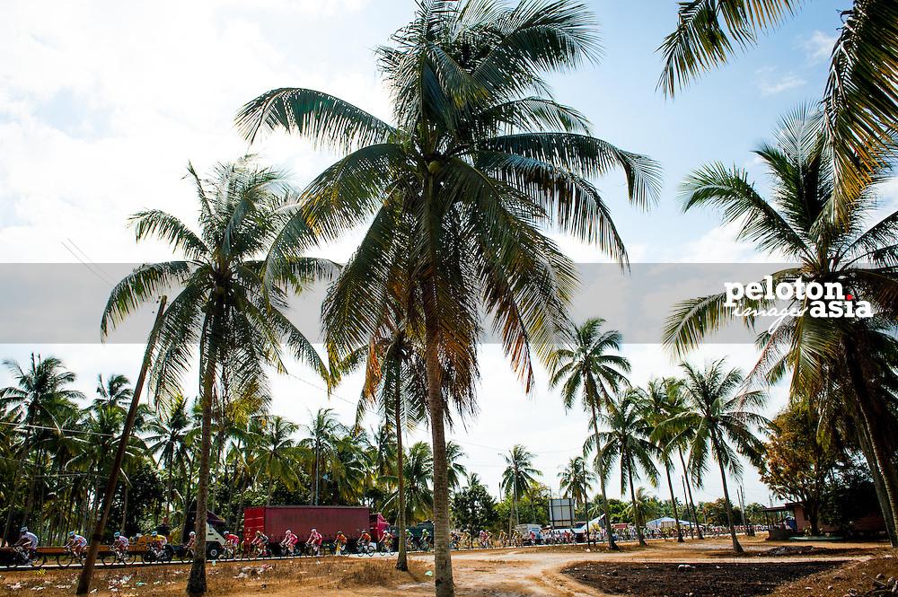 2014 Le Tour de Langkawi / stage8 / langkawi / palm tree /