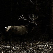 Published:<br /> Steve's Digicam Photo of the Day June 2, 2013 <br /> Oklahoma Photographer