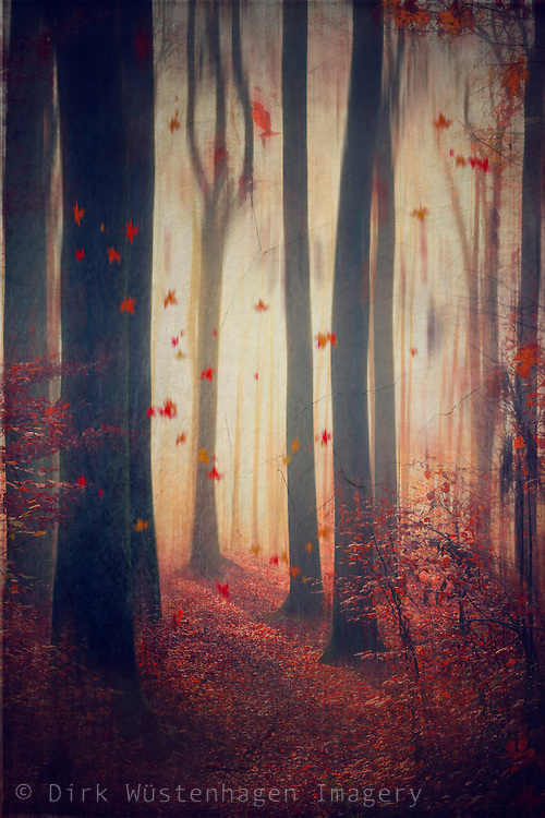 Forest scene in autumn colours with falling leaves - textured and manipulated photograph