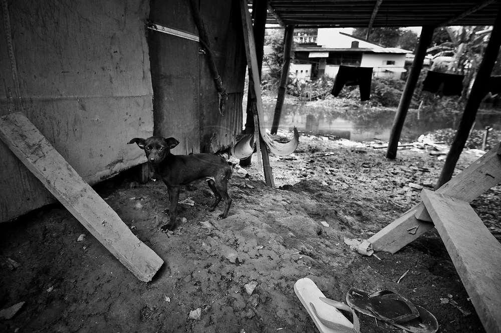 A stray dog under a house in the Lahu village, with the polluted river in the background.