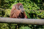 Durrell Orangutan enclosure