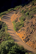 Hikers / Runners on trail (Fire road) in Tilden Regional Park, Berkeley Hills, CALIFORNIA