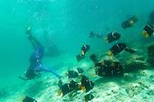 Honeymoon Cove Isla Danzante - IASA