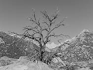 http://Duncan.co/tree-at-the-foot-of-mount-whitney