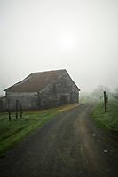 Dry Creek Valley Barn Winter Morning, Sonoma County, California