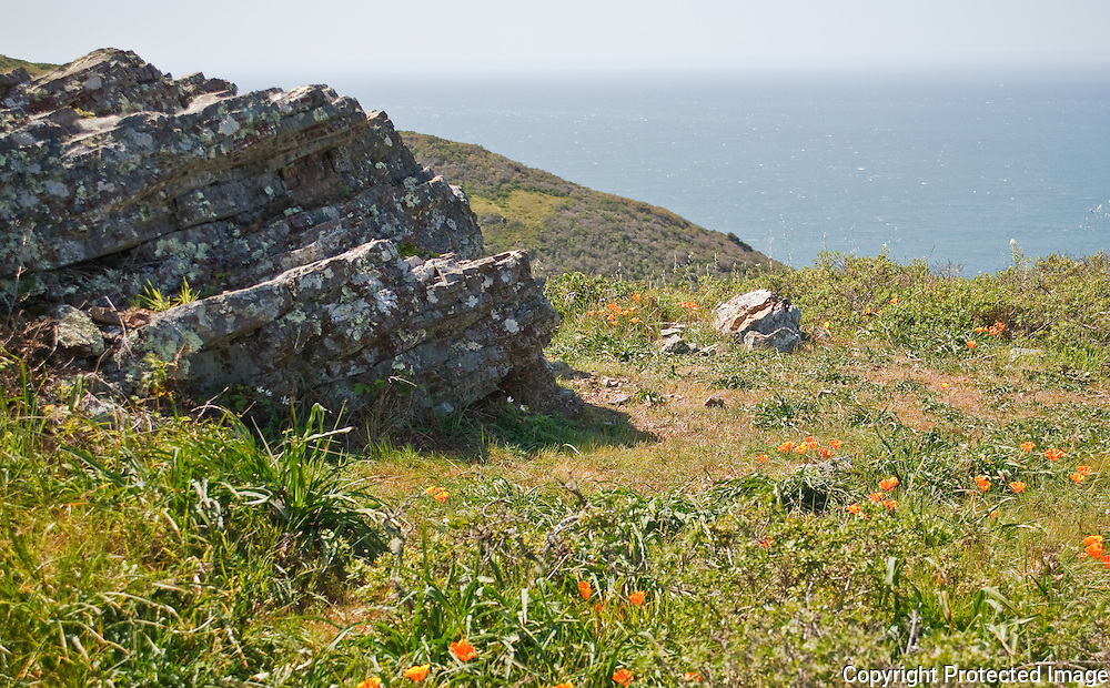 WIldflowers above  the ocean Golden Gate National Recreation Area