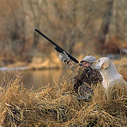 34-620. A waterfowler takes aim at incoming waterfowl with a yellow Lab at his side on the Henry's Fork of the Snake River, Idaho.