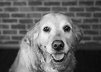 Pet portraits in the studio.<br /> <br /> ©2016, Sean Phillips<br /> http://www.RiverwoodPhotography.com