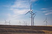 Electric generating windmills share the land and air with wheat farming in the Palouse region of eastern Washington, USA