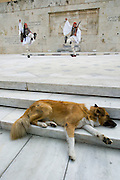 "A dog naps undisturbed during the changing of the guard ceremony in front of the Parliament. The peculiarly dressed guards are called ""Evzones""."