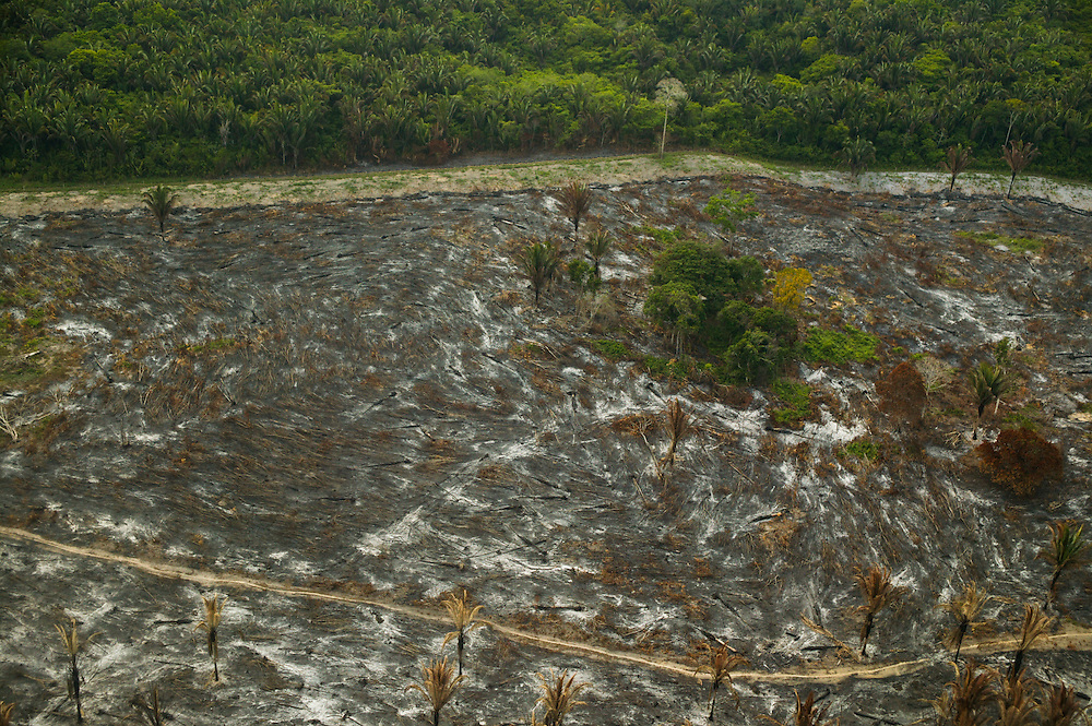 December 6, 2003. Rain forest jungle is cleared  for soy plantations around Santarem, Para State, Brazil. ©Daniel Beltra