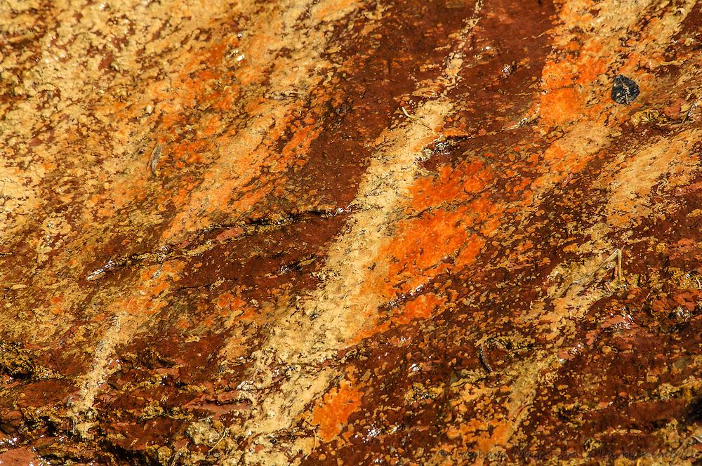 Water and algae color Wingate Sandstone, Escalante Canyon, Mesa County Colorado,