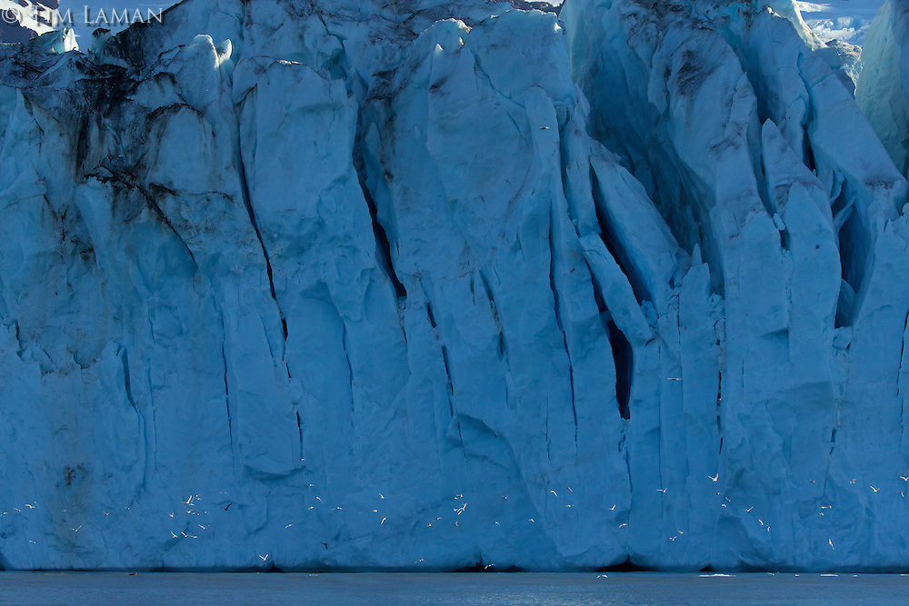 Nordensk&ouml;ld Glacier, Cumberland East Bay<br /><br />South Georgia<br />United Kingdom Overseas Territory<br />A Subantarctic Island in the Southern Ocean