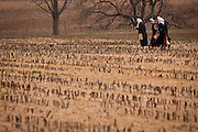 Amish girls walk across a farm field in Gordonville, PA.