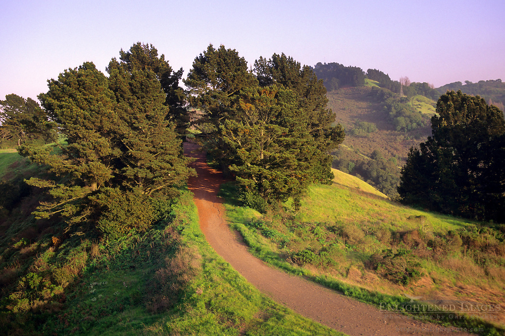 Sea view Trail, Tilden Regional Park, Berkeley Hills, California