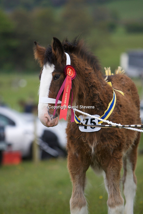 Mr P Woof's Marieth Michaela (Sire - Red Brae Mascot), Champion Foal