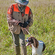 The 2017 Wisconsin English Springer Spaniel Association Hunt Test (WESSA) took place at Rock River Kennels, in Beaver Dam, WI. Photography was made Sept 24, 2017, at the Junior/Senior field. The weather was bright and sunny, field was damp from yesterdays rain shower.