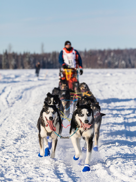 Musher Lars Monsen after the restart in Willow of the 46th Iditarod Trail Sled Dog Race in Southcentral Alaska.  Afternoon. Winter.