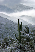 Snow covers the Sonoran Desert in the Rincon Mountains of the Coronado National Forest east of Tucson, Arizona.