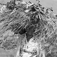 Cape Verde. village of the cadeira in Fogo volcano  Fogo island     / Cap-Vert:  village de la Caldeira , le cratere au pied du volcan pic de Fogo, Dans le cratere éteint est installée une communauté descendant d'Armand de Montrond, aventurier français réfugie dans l ile au 19em siecle  ile de Fogo    /15