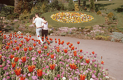 Couple walking through park,