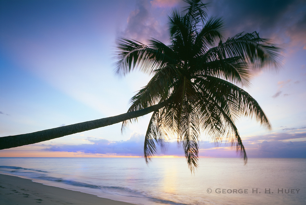 6209-1001 ~ Copyright: George H. H. Huey ~ Coconut palm trees [Cocos nucifera] on Pinney's Beach at dusk. Island of Nevis. Leeward Islands. Lesser Antilles, Caribbean.