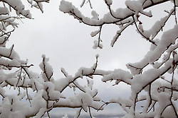 snow covered trees in Santa Fe, New Mexico