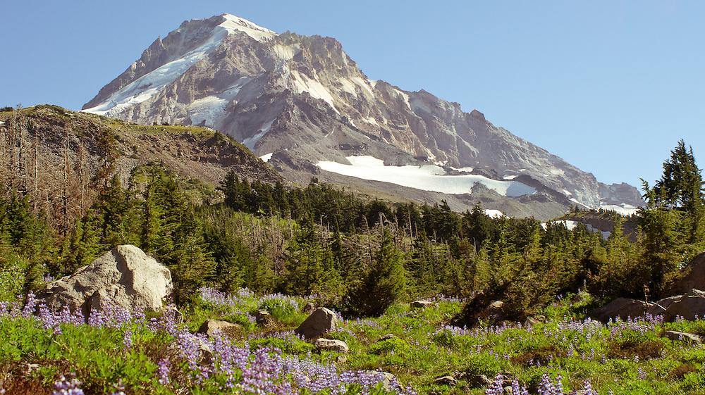 Mt. Hood from the Vista Ridge Trail.