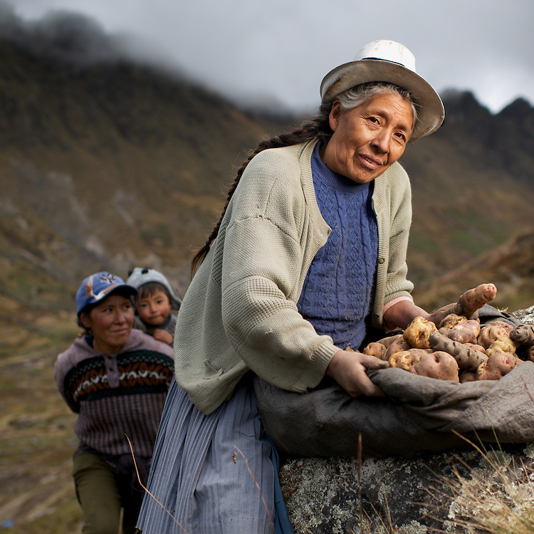 "Potato Harvest in the high Andes of Peru with Señora Fausta ""Uva"" Callupe."