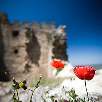 Poppies and ruins, Castle of Montanchez, province of Caceres, Spain