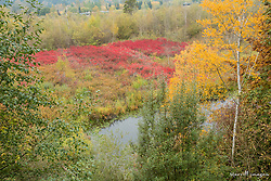 United States, Washington, Bellevue, Mercer Slough Nature Park,