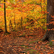 """Within Golden Glory""<br />