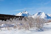 Frozen scene in Grand Teton National Park