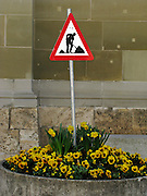 Arbeiter im Blumenbeet. Travaux dans un pot de fleur ... © Romano P. Riedo