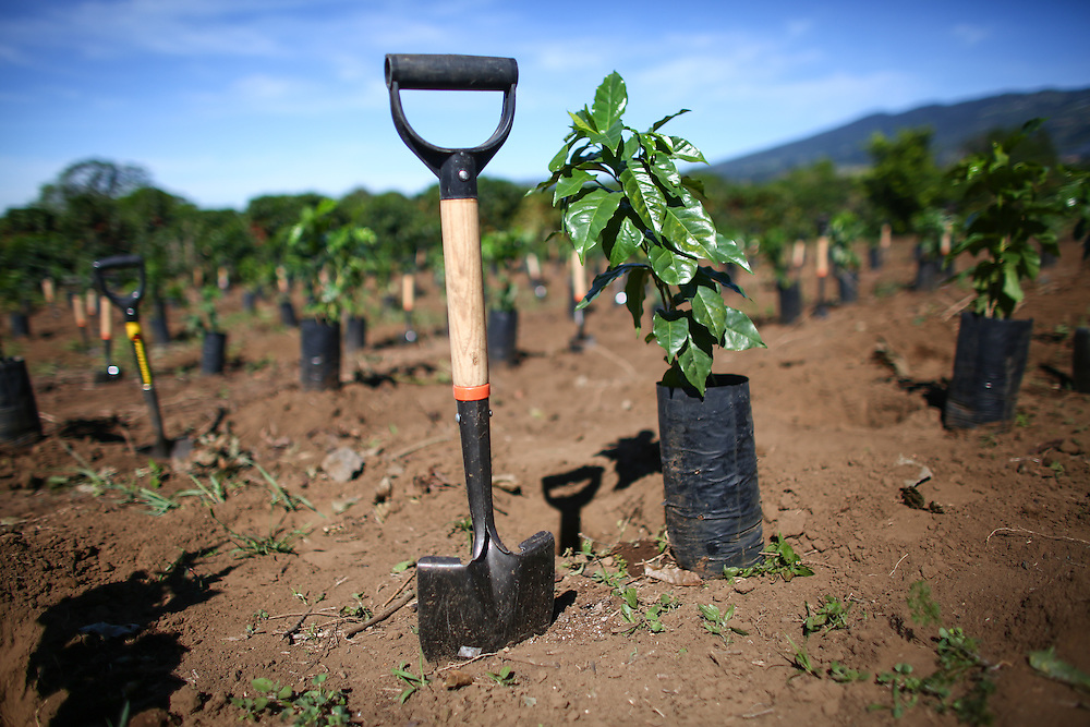 A shovel and coffee tree are readied for planting during the 2016 Starbucks Origin Experience for Partners. Photographed in January 2016. (Joshua Trujillo, Starbucks)