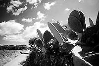 Reportage sviluppato da Lorenzo Papadia ad Alessano(LE), tra marzo e aprile 2010. Viene presa in considerazione fotograficamente, la gente che popola il paese nei suoi bar, piazze, strade, giardini pubblici. Ed, insieme a questa, i particolari e gli eventi caratterizzanti il luogo...particolare della campagna  alessanese.
