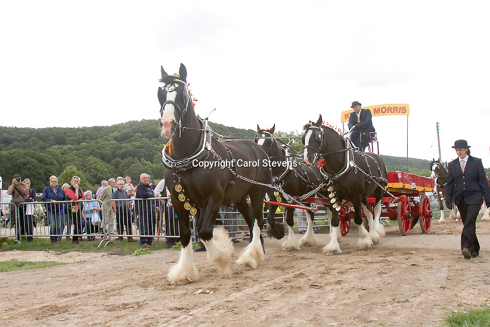 Kevin Morris driving his own Shires, Baron, Sergeant and Jack<br />